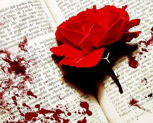 rose rouge avec du sang